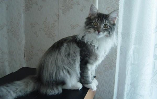 Kamilla (Камилла)