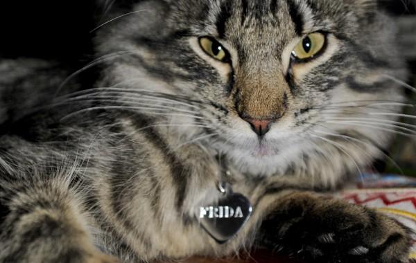 Frida (Фрида)