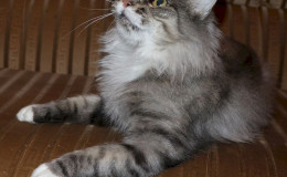 monika-cat-2.jpg