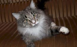 monika-cat-3.jpg