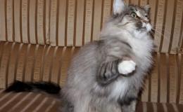 monika-cat-5.jpg